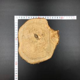 丸太のディスプレイテーブル [M0007][輪切り]