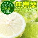 ポイント5倍【愛媛県大三島産】無農薬レモン【サイズバラ2.5キロ】 国産レモン 訳あり ワケあり わけあり レモン れも…