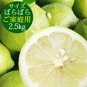 ポイント5倍【愛媛県大三島産】国産レモン【サイズばら2.5kg】【ノーワックス・減農薬・防腐剤不使用】ご家庭用 訳あ…