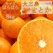 愛媛みかん【ホリ田ヤ】味濃厚。訳ありせとかキズあり4キロ