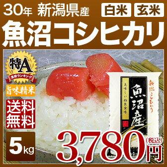 新潟県 魚沼産コシヒカリ 米 5kg 送料無料 29年産の(玄米)又は(白米) 内祝いやお返し ギフトに熨斗(のし)名入れ 可