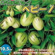 【送料無料・即出荷】ペピーノ【果樹苗10.5cmポット/1個】