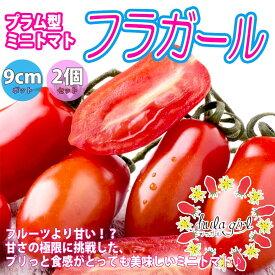 【送料無料・予約】フラガール プラム型のおいしいクランチータイプミニトマト【9cmポット自根苗/2個セット】野菜苗 ミニトマト苗 みにとまと苗 ベランダ tomato