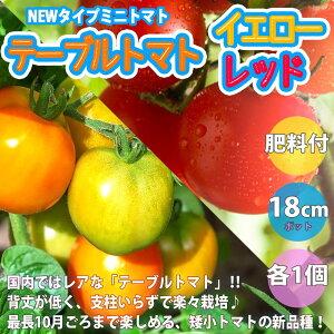 【送料無料・即出荷・予約】テーブルトマト レッド&イエロー ミニトマト大苗【18cm硬質ポット自根苗/赤実&黄色実 各1個+スティック肥料4本】多収穫 野菜苗 みにとまと苗 ベランダ mini tomat