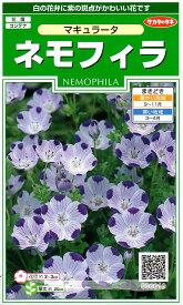 【種子】ネモフィラ マキュラータ サカタのタネ