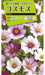 【種子】コスモス ピコティタキイ種苗のタネ