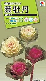 【種子】葉牡丹 瀬戸混合タキイ種苗のタネ