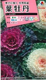 【種子】葉牡丹 F1 はと混合 タキイ種苗のタネ