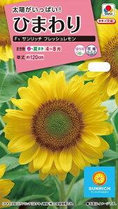 【種子】花粉の出ない緑芯ひまわりF1 サンリッチ フレッシュレモンタキイ種苗のタネ