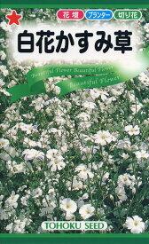 【種子】白花かすみ草 トーホクのタネ