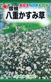 【種子】宿根八重かすみ草トーホクのタネ