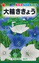 【種子】大輪ききょうトーホクのタネ