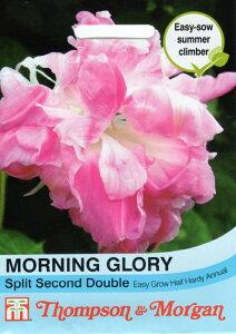 【輸入種子】Thompson&MorganMORNING GLORY Spilit Second Doubleモーニング・グローリー(朝顔) スピリット・セカンド・ダブル トンプソン&モーガン