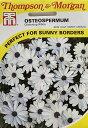 【輸入種子】Thompson & Morgan Osteospermum Glistening White オステオスペルマム グリスニング・ホワイト トンプソ…