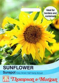 【輸入種子】Thompson&Morgan SUNFLOWER Sunspotサンフラワー(ひまわり)・サンスポット トンプソン&モーガン