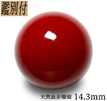 【鑑別付】天然血赤珊瑚14.3mm20.734ct日本産サンゴコーラル本珊瑚丸珠ルース【加工承ります】