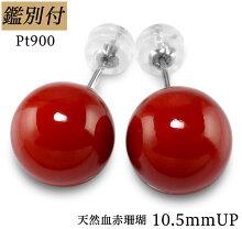 【鑑別付】Pt900天然血赤珊瑚10.5mmプラチナスタッドピアス日本産本珊瑚コーラルサンゴcoralピアスレディース