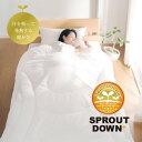Sproutdownplus 01