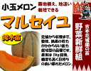 Melon t 02