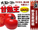 Tomato t 01
