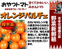 Tomato t 04