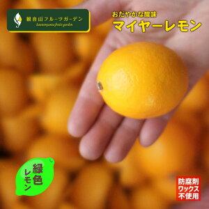 マイヤーレモン A級品 グリーン 4kg 皮まで安心の国産マイヤーレモン 和歌山 観音山フルーツガーデン 予約商品