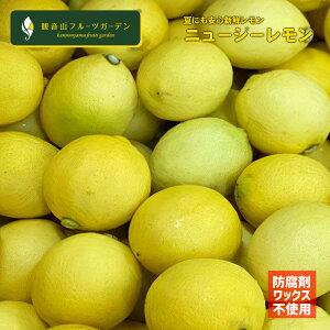 レモン ニュージーレモン ノーワックス・ノー防腐剤 皮まで安心のニュージーランド産レモン 10kg 観音山フルーツガーデン 送料無料