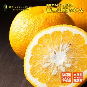 夏みかん 和歌山 観音山 江戸千季 訳ありB級品 5kg 観音山フルーツガーデン
