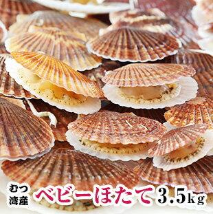 青森県むつ湾産【訳あり】活ベビーほたて3.5kg 2月から5月まで販売