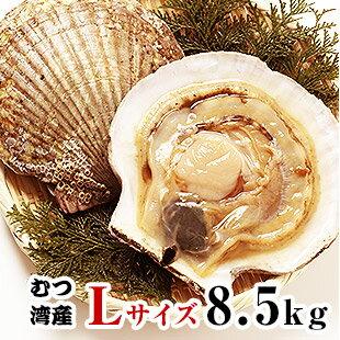 青森県むつ湾産活ほたて Lサイズ 8.5kg (34枚~42枚)