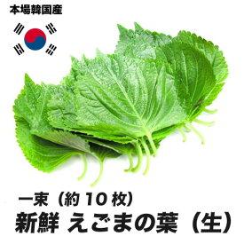 えごまの葉(生)韓国産 一束(約10枚)(エゴマ)[韓国食材] 〔韓国野菜〕お取り寄せ