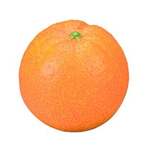 お供え果実 オレンジ イミテーションフルーツ フェイクフルーツ 果物 御供 供物 お彼岸 お盆 先祖供養 贈答 贈答用