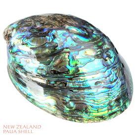 天然パウアシェル アバロンシェル 通常サイズニュージーランド パウア貝 貝殻シェルトレイ 貝の小物入れ オブジェ インテリア アバロニ ビーチスタイル