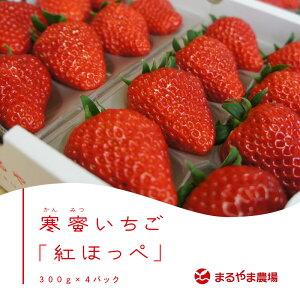 【産直商品】静岡県産「寒蜜いちご」紅ほっぺ300g×4P ※12月20日から順次発送致します。