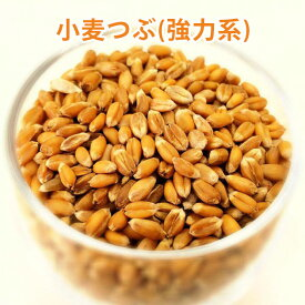 小麦つぶ 春よ恋 500g【北海道産 小麦粒 玄小麦】【春まき 小麦 春よ恋 強力系】【自家 製粉】