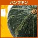 パンプキンパウダー 30g 【HappyPrice100YEN】【北海道産 かぼちゃ 100% 使用 かぼちゃパウダー 野菜パウダー 粉末 …