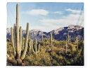 Tapes ks cactus 01