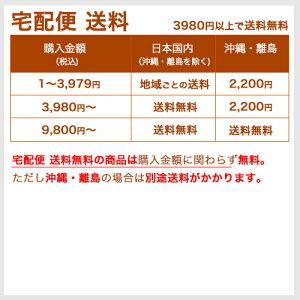 訳ありウェットスーツRinconリンコンジャンクフルスーツフロントジップ2mm×2mm女性用レディースLサイズ(M幅)送料無料