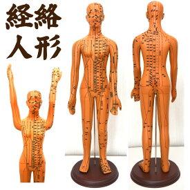 経絡・経穴(ツボ)人形 人体模型 鍼灸 エステサロン用品