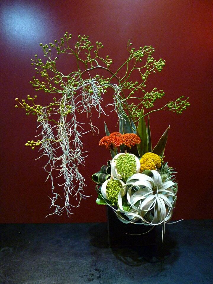 エアープランツ キセログラフィカ MOBBS 植物