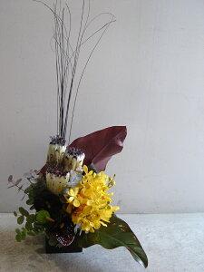 【アレンジメント】プロテア ニオベ モカラ アンスリューム ピンポンマム ユーカリ フィロデンドロン