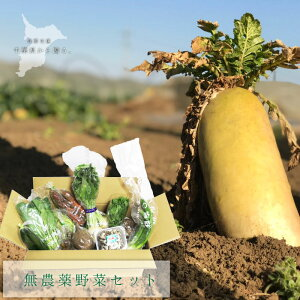 オーガニック野菜セット無農薬 野菜 父の日 ギフト 内祝 無農薬野菜 千葉県産 季節野菜 にんじん たまねぎ こまつな 長ネギ 里芋 ちんげんさい 大根 ミニトマト きゅうり アイスプラント