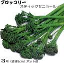 茎ブロッコリー スティックセニョール 20ポットセット 9cmpot苗 【ラッキーシール対応】
