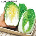 ミニハクサイ苗・お黄にいり白菜 5ポットセット 9cmポット苗