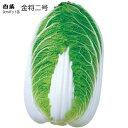 白菜苗・金将2号 5ポットセット 9cmポット苗