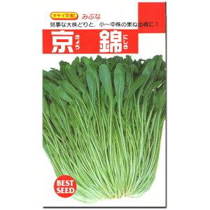 みぶな 種子 京錦 5ml