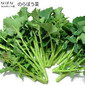 菜花 のらぼう菜 9cmポット苗 なばな
