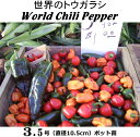ホットペッパー・世界の唐辛子6種類選択WorldChiliPepper(10.5cmポット苗)トウガラシ