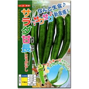 甘 とうがらし 種子 サラダ甘長 25粒 トウガラシ 【ラッキーシール対応】