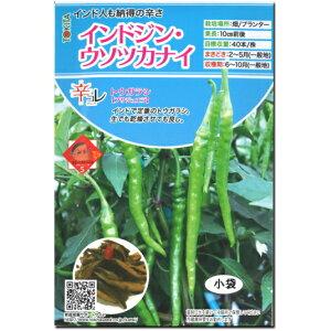 辛 とうがらし 種子 インドジン・ウソツカナイ 20粒 トウガラシ (プサジュエラ)辛コレ(からこれ)シリーズ